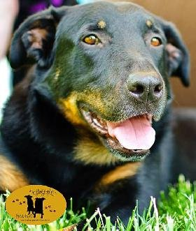Mid America Rottweiler Rescue presents