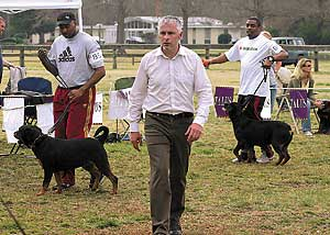 THE DAILY NEWS / Randy Davey / Going to the dogs: Gerard O'Shea, looking at the female rottweilers during the East Carolina Rottweiler Klub 2007 Winter Sieger Show, traveled from Sweden to judge the show at the Onslow Pines Park.