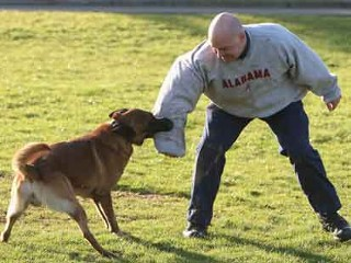 Study Shows 'Confrontational' Training Only Makes Your Pooch More Aggressive.